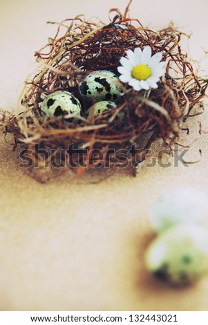 eggs in grass nest with flower - shallow depth of field - stock photo