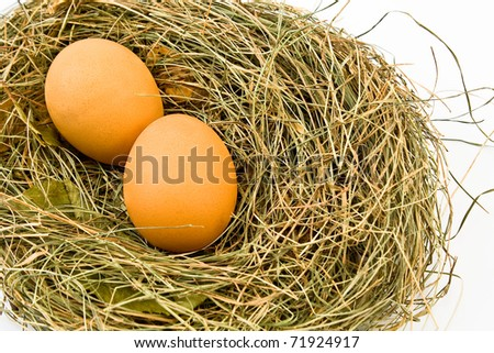 Eggs in nest isolated on white