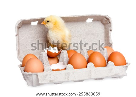 Eggs in the package with cute baby chick - stock photo