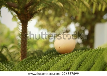 Eggs on green leaves at the park. - stock photo