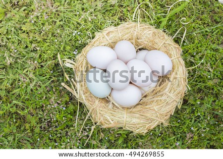 Eggs on the grass