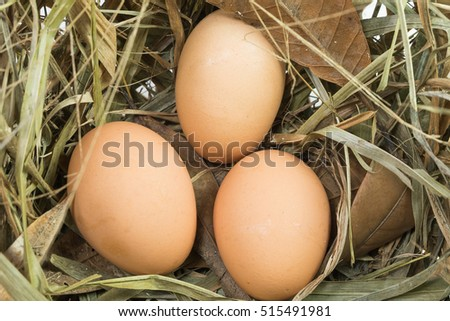 Eggs on the hay net