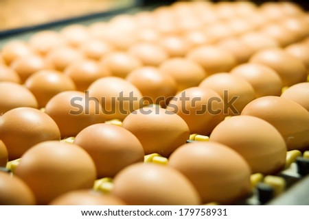 Eggs on the production line - stock photo