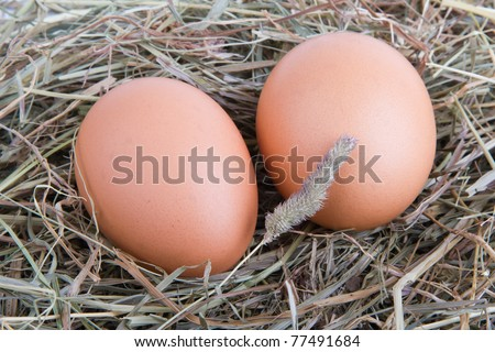 eggs-twins in hay - stock photo