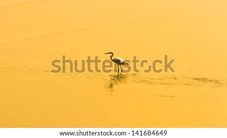 egret birds in silhouette scene - stock photo