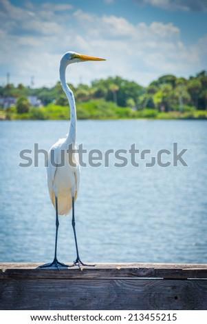 Egret on a fishing pier in Miami, Florida. - stock photo