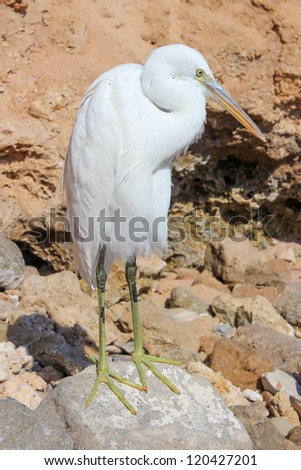 Egret standing on the rocks - stock photo