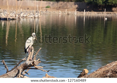 Egret standing on twig near the pond - stock photo