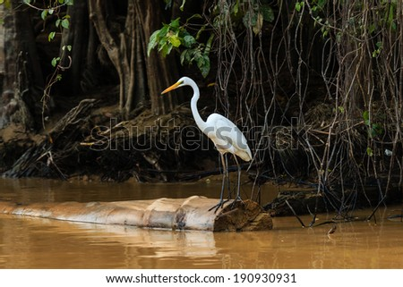 Egret waits on a fallen tree on a jungle river - stock photo