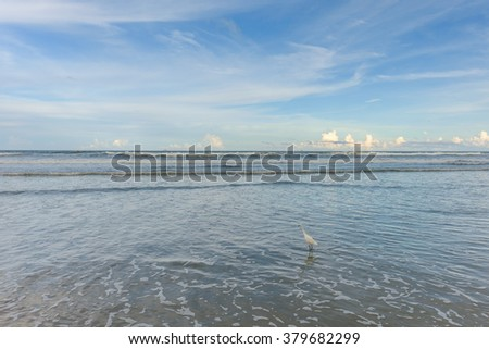 Egrets hunt for prey and fish in the small pools formed by the outgoing tides - stock photo