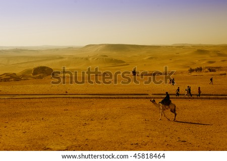 Egyptian desert with a camel