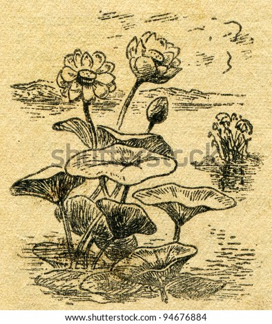 """Egyptian lotus - an illustration from the book """"In the wake of Robinson Crusoe"""", Moscow, USSR, 1946. Artist Petr Pastukhov - stock photo"""