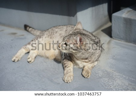 https://thumb7.shutterstock.com/display_pic_with_logo/167494286/1037463757/stock-photo-egyptian-mau-in-a-rooftop-1037463757.jpg