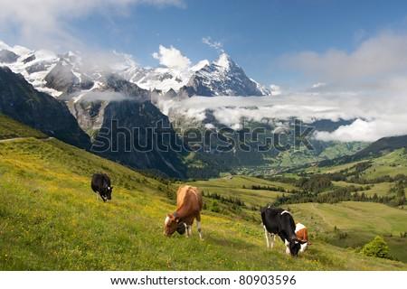 Eiger, Schreckhorn and neighborhood in Berner Alpen, Switzerland - stock photo