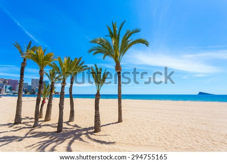 Eight beautiful and green palms trees with a brown trunk on clean white beach against the blue sea and the city's buildings. The sky is clear and blue. - stock photo