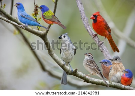 Eight Feathered Friends  - stock photo