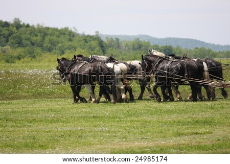Eight Horse Team pulls spreader in Field - stock photo