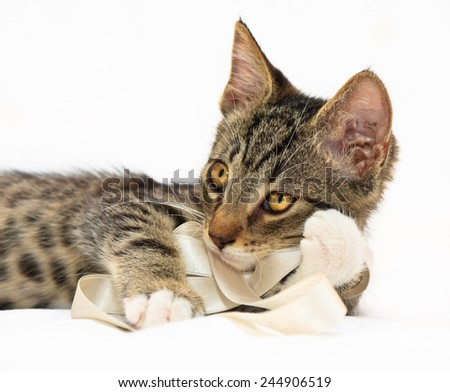 Eight weeks old tiger (tabby) pattern kitten laying on a bed playing with a white band - stock photo