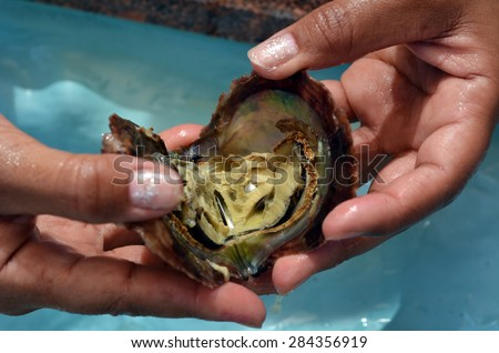 EILAT ,ISR - APR 14 2015:Woman hand holds an open oyster with pink pearl in it.Natural pearls values determined according to size, shape, color, quality of surface, orient and luster