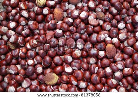 Ein Haufen Kastanien im Herbst - stock photo