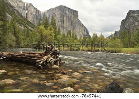 El Capitan looms over a fallen Cedar Tree in the Merced River in Yosemite Valley in Yosemite National Park - stock photo