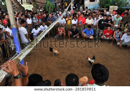 EL NIDO, PHILIPPINES - 12 OCTOBER 2012: Traditional cockfighting competition. Cock fights are illegal, however are tolerated out of tradition. - stock photo