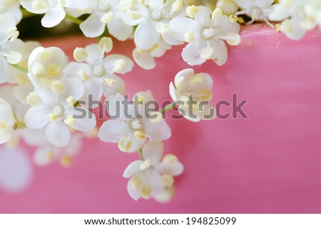Elderberry flowers - stock photo