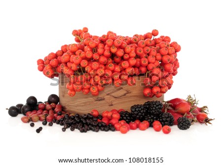 Elderberry, rose hip, hawthorn, blackberry, blackthorn, and rowan mountain ash berry fruit in a wooden bowl on white background. Very high in vitamin c and antioxidants. - stock photo