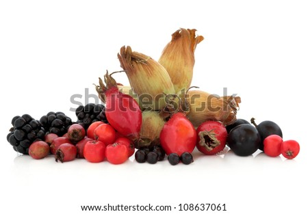 Elderberry, rosehip, hawthorn, blackberry, blackthorn and rowan mountain ash berry fruit with hazelnuts on white background. - stock photo