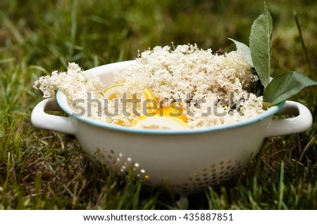 Elderflower with lemons ready for syrup in vintage colander in a garden  - stock photo