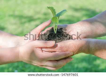 Elderly and young female hands holding soil with sprout - stock photo