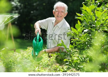 Elderly man is pouring water on his plants