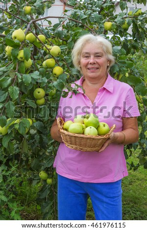 Elderly woman collecting apples in the garden in August