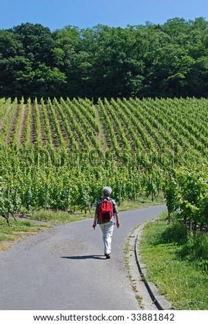 Elderly woman hiking among the vineyards - stock photo