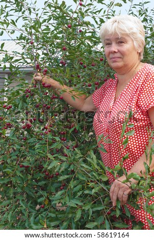 Elderly woman in a garden collects cherry berries