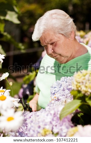 elderly woman with the flower garden shears cut - stock photo