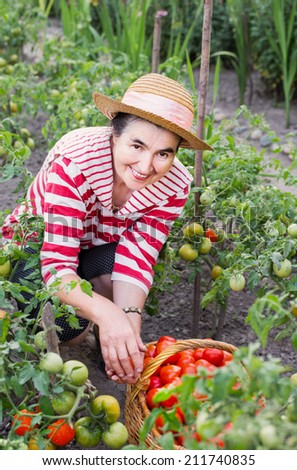 Elderly women of a kitchen garden received harvest of tomatoes