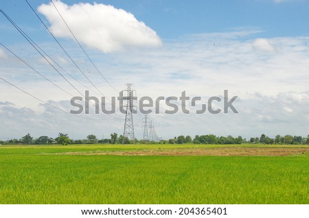 electric power lines against blue sky on rice field.