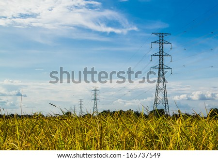 Electric transmission tower in the golden rice field. - stock photo