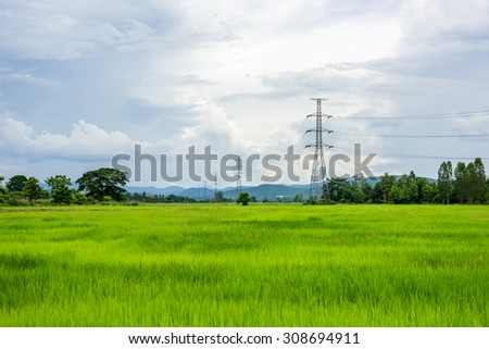 Electrical net of poles on blue sky and green rice meadow.