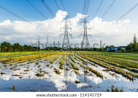 electricity high voltage power post in paddy field - stock photo