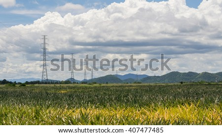Electricity poles in Pineapple field , Thailand