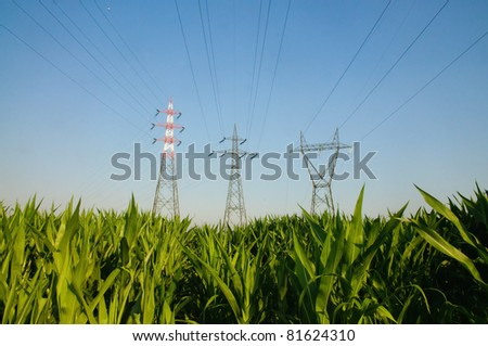 Electricity pylons in a cornfield - Summer, Italy - stock photo