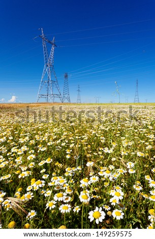 Electricity pylons in a flowers field. Clean energy.