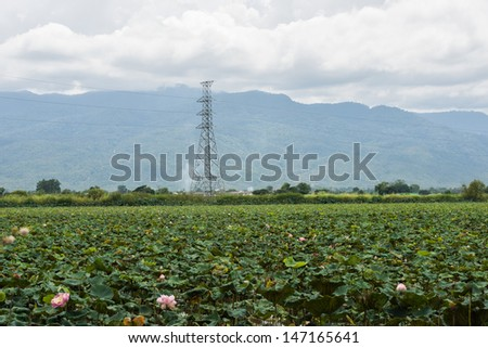 electricity transmittion tower with lotus and mountain