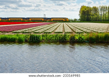 Electrified Railway between the Fields of Tulips in Netherlands - stock photo