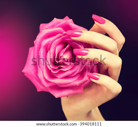 Elegant female hands with pink manicure on the nails . Beautiful fingers holding a rose . - stock photo