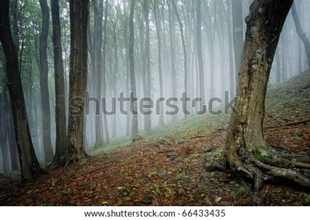 elegant forest picture with trees and fog - stock photo