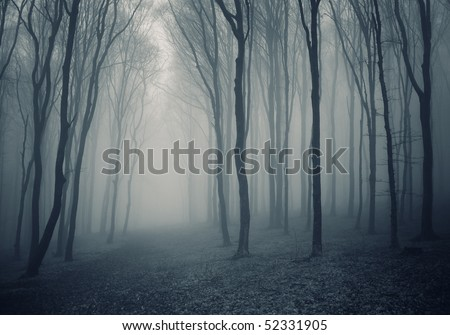 elegant forest with fog - stock photo