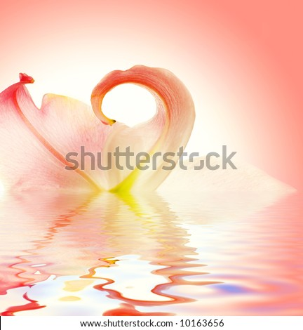 Elegant lily flower reflected in rendered water - stock photo